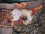 Drôle de cadeau de Noël : Bienvenue petit Gaëlik dans Chihuahua DSCF0253-150x112